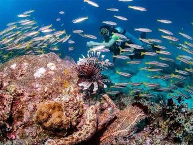 غواصی در بهترین سواحل با خرید تور تایلند رسپینا24
