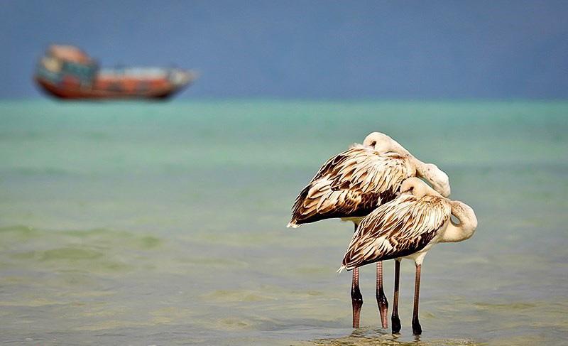 راهنمایی های لازم برای خرید آنلاین تور جزیره ی کیش