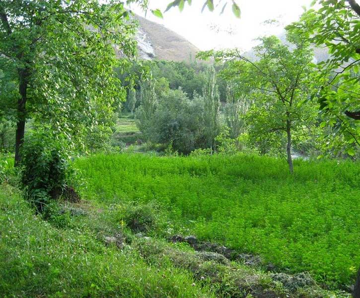 تور یک روزه ی طبیعت گردی دره ایدلیک از مشهد با رسپینا24