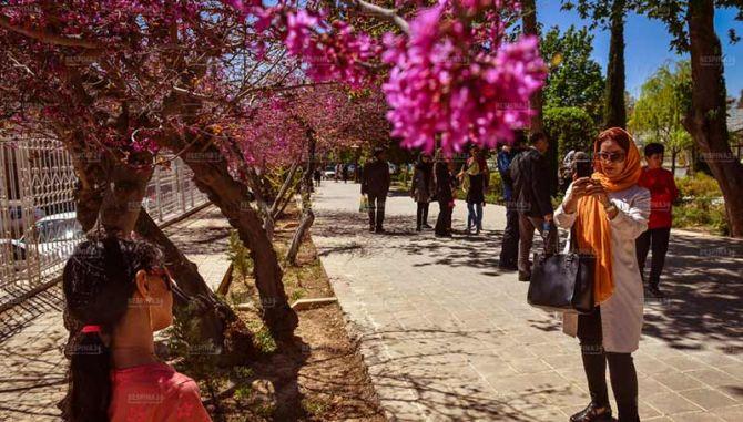 خرید تور شیراز